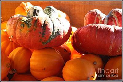 Mexican Pumpkins And Gourds Original by Dora Sofia Caputo Photographic Art and Design
