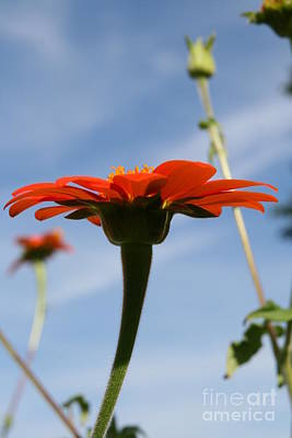 Photograph - Mexican Sunflower Dance  by Neal Eslinger