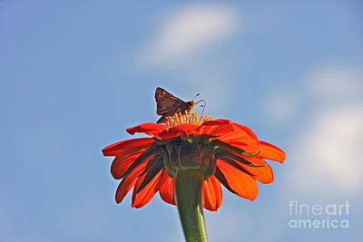 Photograph - Mexican Sunflower Hat Dance by Byron Varvarigos