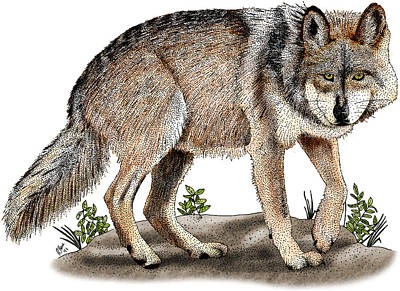 Mexican Wolf Photograph - Mexican Wolf by Roger Hall
