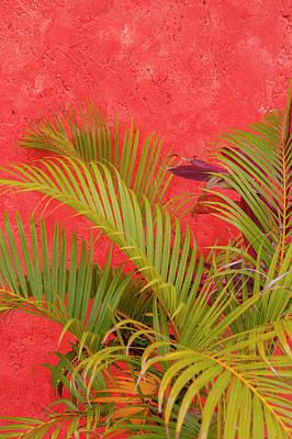Cozumel Wall Art - Photograph - Mexico, Cozumel, Palm Tree by Lisa S. Engelbrecht