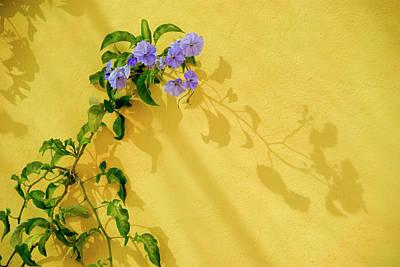 Morning Glories Photograph - Mexico, San Miguel De Allende, Morning by Jaynes Gallery