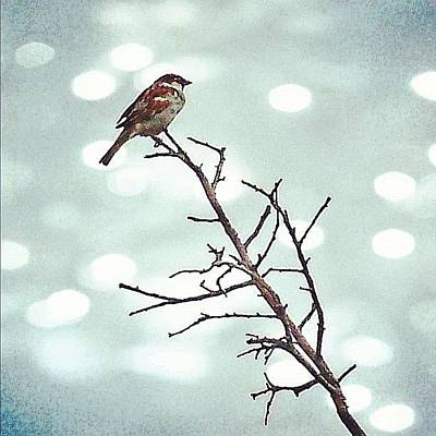 Iphonesia Photograph - #mgmarts #bird #nature #life #bestpic by Marianna Mills