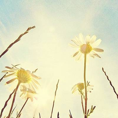 Sunny Photograph - #mgmarts #daisy #all_shots #dreamy by Marianna Mills