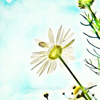 Sky Photograph - #mgmarts #daisy #flower #morning by Marianna Mills