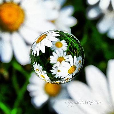 Sky Wall Art - Photograph - #mgmarts #daisy #flower #weed #summer by Marianna Mills