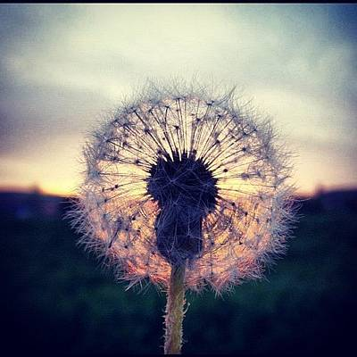 Sunset Wall Art - Photograph - #mgmarts #dandelion #sunset #simple by Marianna Mills