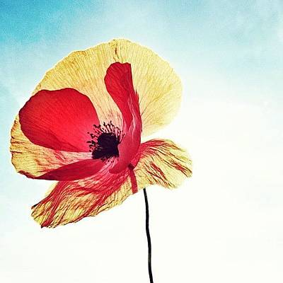 Iphonesia Photograph - #mgmarts #poppy #nature #red #hungary by Marianna Mills