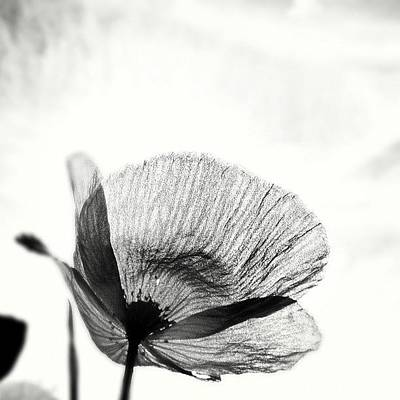 Summer Photograph - #mgmarts #poppy #summer #spring #sunny by Marianna Mills