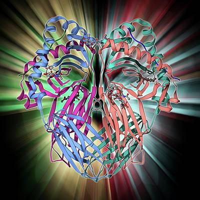 Mhc Protein Complexed With Flu Virus Art Print by Laguna Design