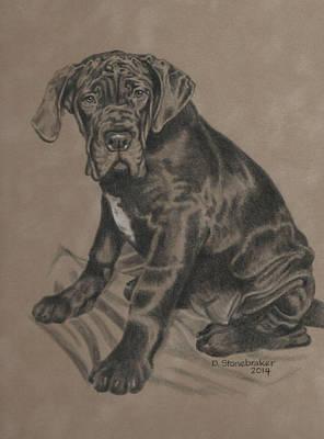 Puppy Drawing - Mia by Debbie Stonebraker