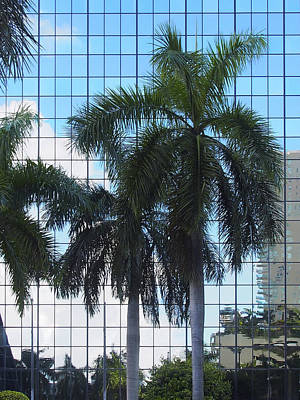 Photograph - Miami 21 by Karen Zuk Rosenblatt