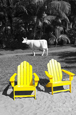 Photograph - Cow And Rocking Chairs - Miami Beach Series 05 by Carlos Diaz