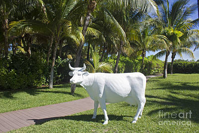 Photograph - White Cow Statue - Miami Beach Series 06 by Carlos Diaz