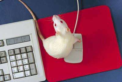 Mice, Animal And Computer Art Print