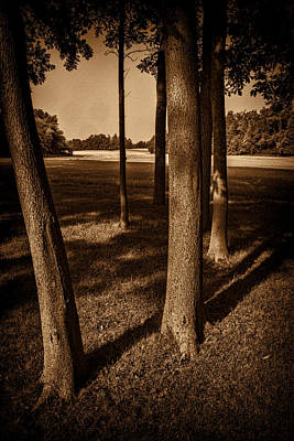 Curated Beach Towels - Mich. Trees 2 by Dennis Sullivan