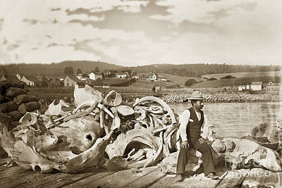 Photograph - Michael Noon Sitting On A  Pile Of Whale Bones Monterey Wharf  Circa 1896 by California Views Archives Mr Pat Hathaway Archives