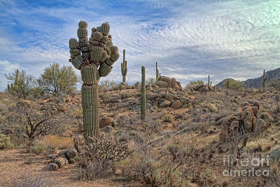 Photograph - Michelin Man Saguaro by Marianne Jensen