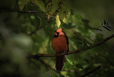 Photograph - Michigan Cardinal by Mike Lanzetta