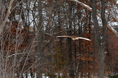 Photograph - Michigan Redtail Hawk by Wesley Elsberry