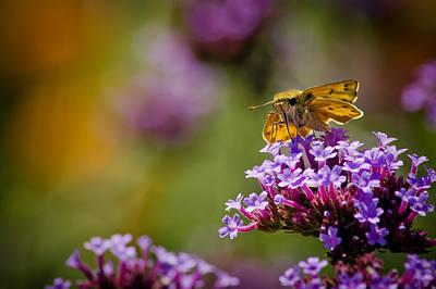 Photograph - Michigan Skipper Moth by LeeAnn McLaneGoetz McLaneGoetzStudioLLCcom