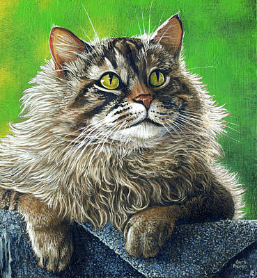 Maine Coon Cat Painting - Micmac by Cara Bevan
