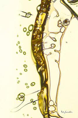 Micro Art Beer 13 Art Print