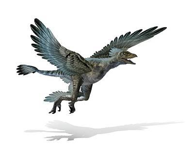 Microraptor Dinosaur Art Print by Mikkel Juul Jensen