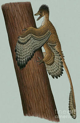Microraptor Digital Art - Microraptor Gui, A Small Theropod by Heraldo Mussolini