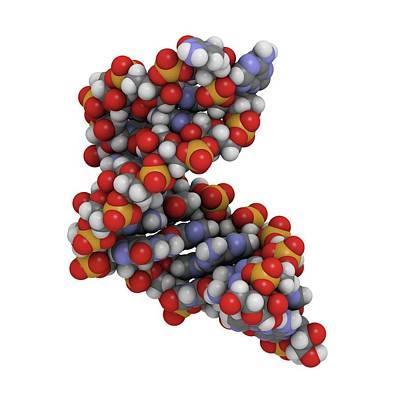 Microrna Molecule Art Print by Molekuul