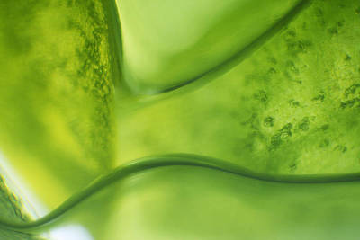 Photograph - Microscope - Leaf And Bubble 6 by Afrison Ma