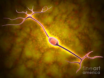 Bipolar Digital Art - Microscopic View Of A Bipolar Neuron by Stocktrek Images
