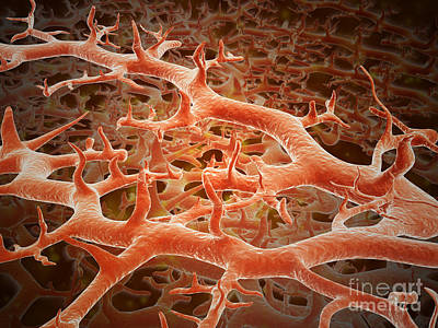 Fungi Digital Art - Microscopic View Of Athletes Foot by Stocktrek Images