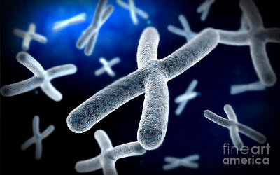 Chromosome Digital Art - Microscopic View Of Chromosome by Stocktrek Images
