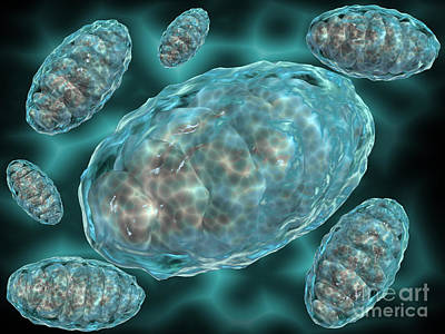 Molecular Biology Digital Art - Microscopic View Of Mitochondria by Stocktrek Images