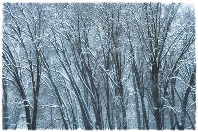 Mid-winter Storm Art Print by Jonathan Nguyen