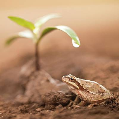 Amphibians Photograph - Middle East Tree Frog by Photostock-israel