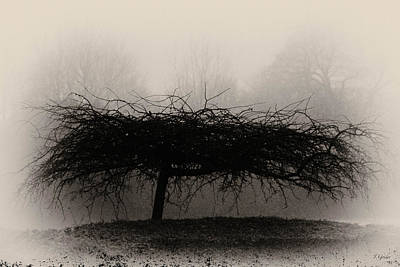 Photograph - Middlethorpe Tree In Fog Sepia - Award Winning Photograph by Tony Grider
