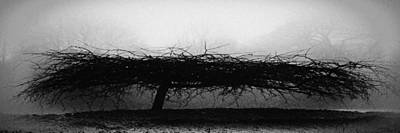 Photograph - Middlethorpe Tree In Fog Bw Panorama by Tony Grider