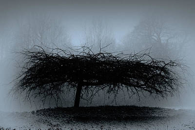 Photograph - Middlethorpe Tree In Fog Blue by Tony Grider