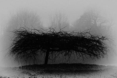Photograph - Middlethorpe Tree In Fog Bw by Tony Grider