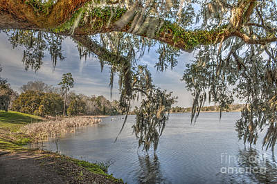 Photograph - Middleton Plantation Grounds by Dale Powell