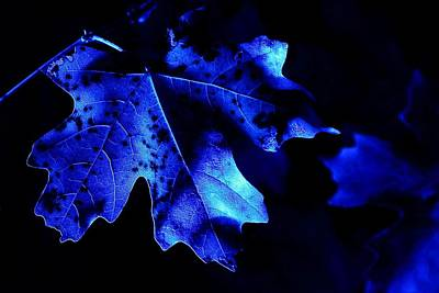 Photograph - Midnight Blue by David Andersen
