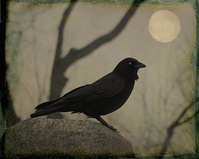 Midnight Crow Lit By The Eerie Full Moon Print by Gothicrow Images