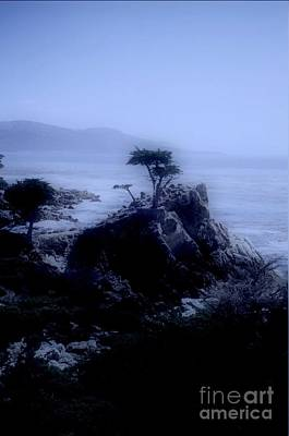 Michael Jackson - Midnight Cypress by Kathleen Struckle