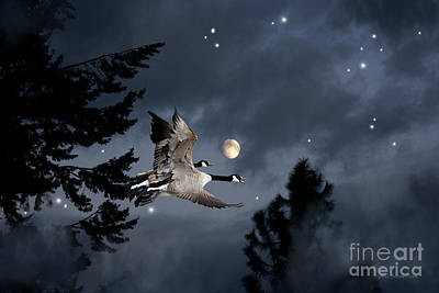 Beve Brown-clark Photograph - Midnight Flight by Beve Brown-Clark Photography