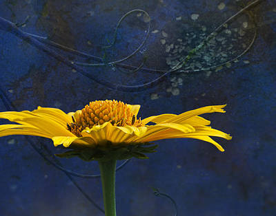 Composite Photograph - Midnight Gold by Barbara Smith