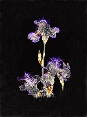 Photograph - Midnight Iris by Ron White