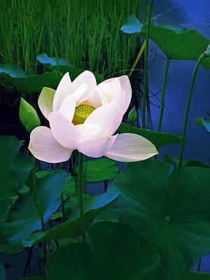 Lily Pad Digital Art - Midnight Lotus by Jessica Jenney