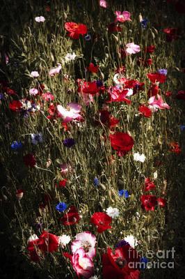 Cornflower Photograph - Midnight Poppies by Elena Elisseeva